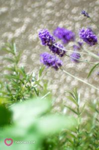 Balkon Lavendel